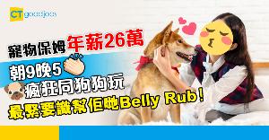 【絕世筍工】年薪26萬做寵物保姆 朝9晚5同狗狗擁抱、玩耍、影靚相
